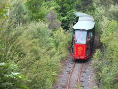 """mit der """"Bimmelbahn"""" durch den Busch"""