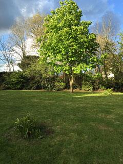 Un joli jardin exposé plein sud de 1700m2 clos offre un lieu de calme bien protégé des petits vents bretons