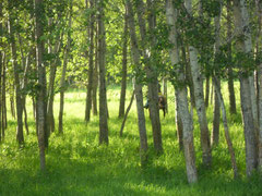 Summer's lush greenery