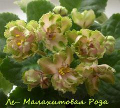 ЛЕ-Малахитовая Роза