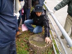 キノコが生えた街路樹は腐っている。(緑政課岩村さん)