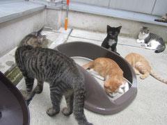 みんなで、トイレと遊んでま~す。