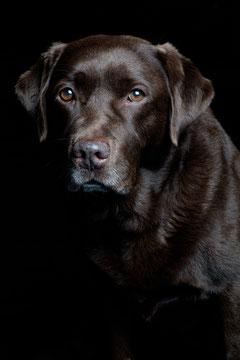 Hund Studioportrait -Tierfotograf