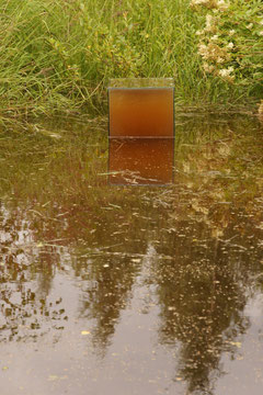 あとは濁りが引くのを待つばかり… 底部では池の水中でつながっていますから、魚や水生昆虫などがキューブの上に上がってきます。