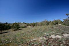 Biotope Lézard ocellé  - Ile d'Oléron (17) - 14 avril 2014