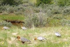 Am nächsten Morgen pickt Kordulas Lieblingsvogel um unser Womo rum. Sie nennt ihn Langschnäbler(?)
