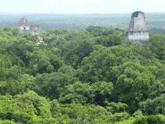 Die Tempel liegen mitten im Urwald (aufgenommen vom Tempel IV)