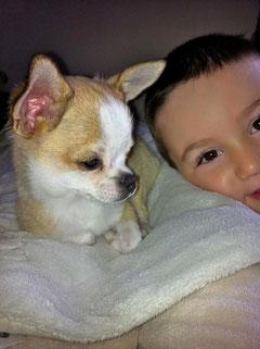 chien chiwawa