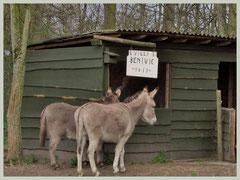 Baasje binnen; ezeltjes wachten beleefd buiten!