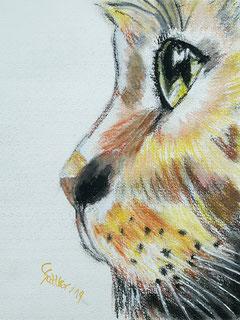 Bild, Kater, braun, orange, grüne Augen, Titel Katergrinsen