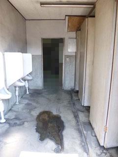 松戸市水まわりトイレ施工前