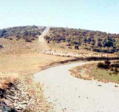 Schafherde auf dem Lubéron
