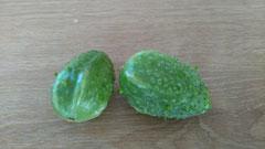 Angurische Gurke: Kleinere Früchte mit weichen Stacheln. Foto Bio Gärtnerei Kirnstötter