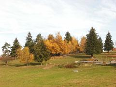 November 2011 Schwarzwald