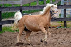 Für Pferde-Freunde von groß bis klein.