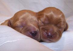 2 ruby Mädchen 4 Tage alt