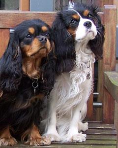 Alice und Babette in Lingen