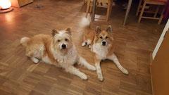 Elo Familienhund Welpe