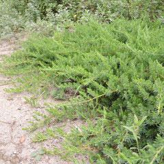 乾燥に耐える木 おすすめ