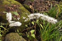 草花の種類