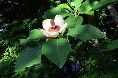 良い香りのする木