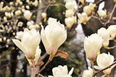 香りの良い花木