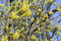 クスノキ科の植物