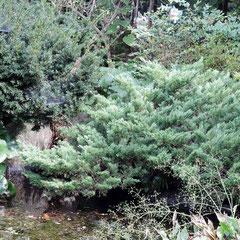 病害虫に強い樹木