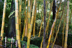 笹と竹の種類 違い