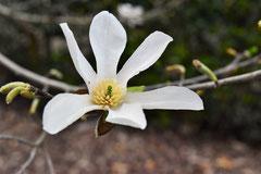 良い香りがする木の花