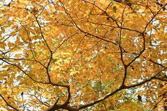 香ばしい木