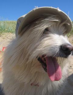 .....ich ziehe mal lieber eine Kappe auf, als Sonnenschutz. Das machen die Menschen doch auch so....