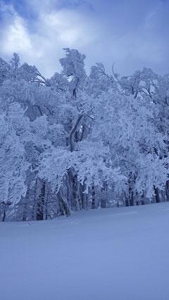 Die Bäume im Winterkleid.
