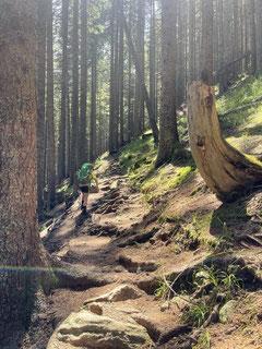 """Steiler Weg durch den """"Grüen-Wald""""."""