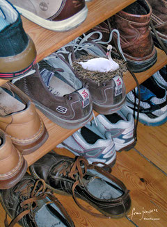 Schwan im Schuh