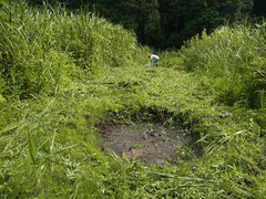 池の周りの草刈り