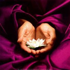 Fleur de lotus en offrande