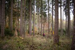 Geschichten, Vortäge und Projekte in und über die Natur