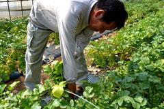 無農薬野菜  スリーエフ農法