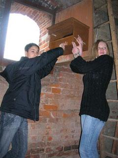 Konfirmanden der Klosterkirche Bordesholm installieren einen Turmfalkenkasten an ihrer Kirche