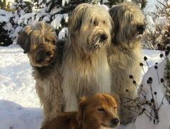 Teamwork Dogs