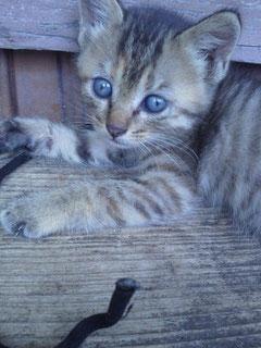 つぶらな瞳のさび猫ちゃん