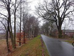 Baumfällaktion Hörsten 2012