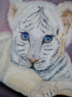 petit tigre blanc aux yeux bleus