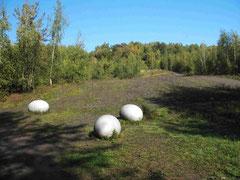 Dino-Eier auf der Halde (Foto: Wolfgang Voigt)