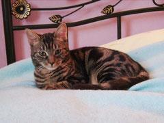 Topaze (6 mois) adopté le 16 janvier