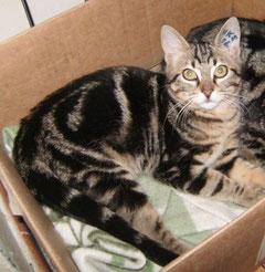 Tigrou (6 mois) adopté le 10 janvier