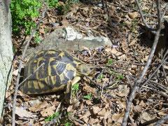 природа Коста Брава, детские экскурсии на Коста Брава, гид на Коста Брава