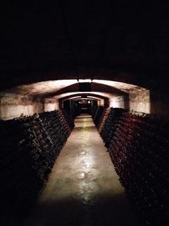 винные погреба в Барселоне, винные погреба в Испании