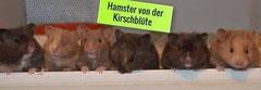 """""""Hamster von der Kirschblüte"""" von Nici aus Hemer"""